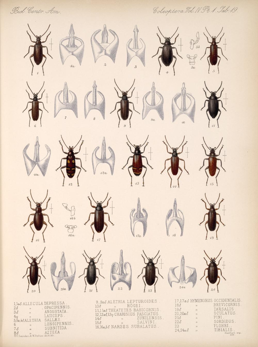 Beetles,  Image number:bca_12_04_01_631