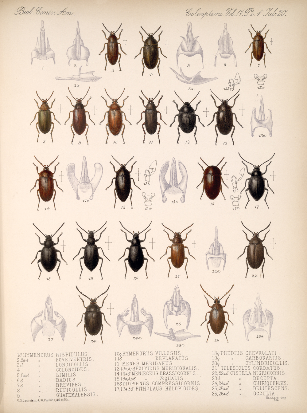 Beetles,  Image number:bca_12_04_01_632