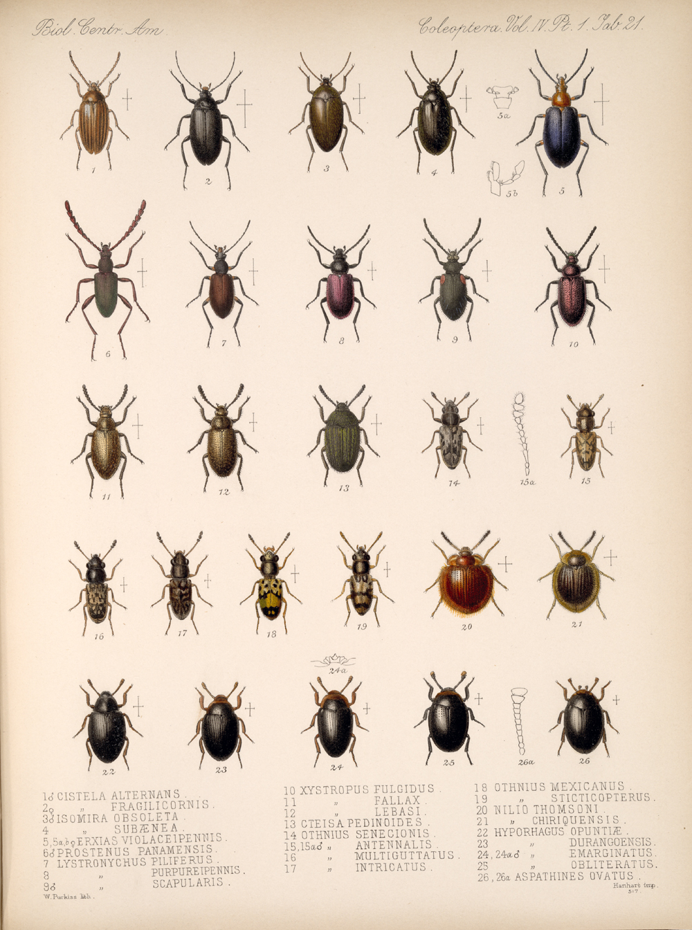 Beetles,  Image number:bca_12_04_01_633