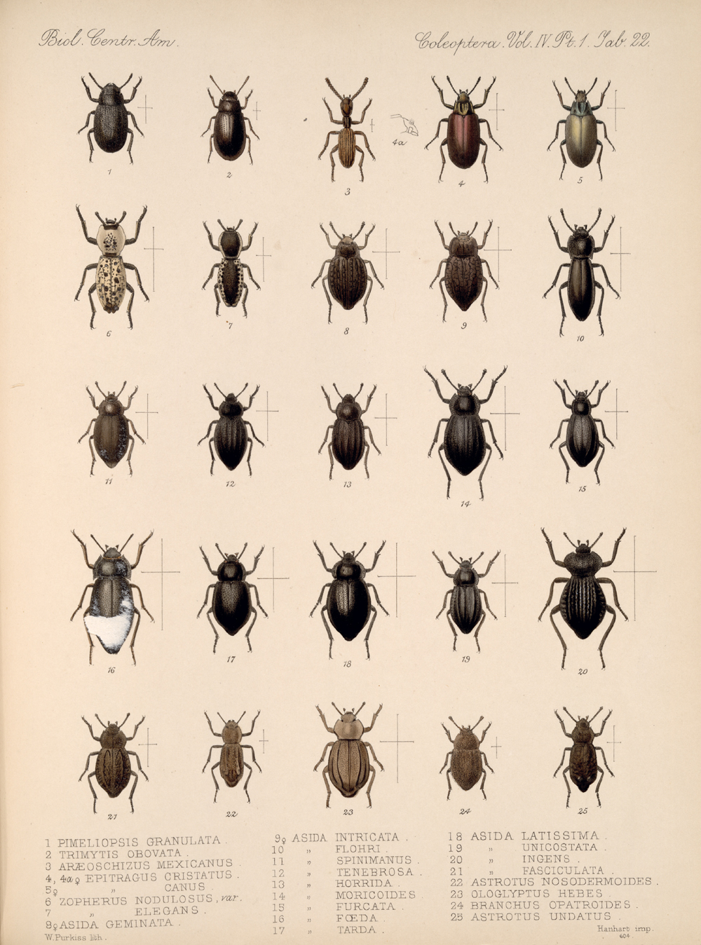 Beetles,  Image number:bca_12_04_01_634