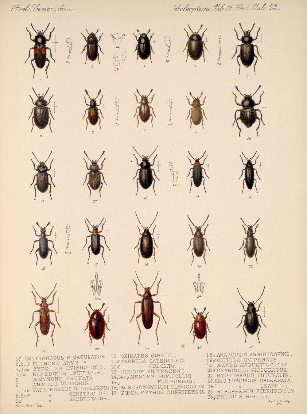 Beetles,  Image number:bca_12_04_01_635