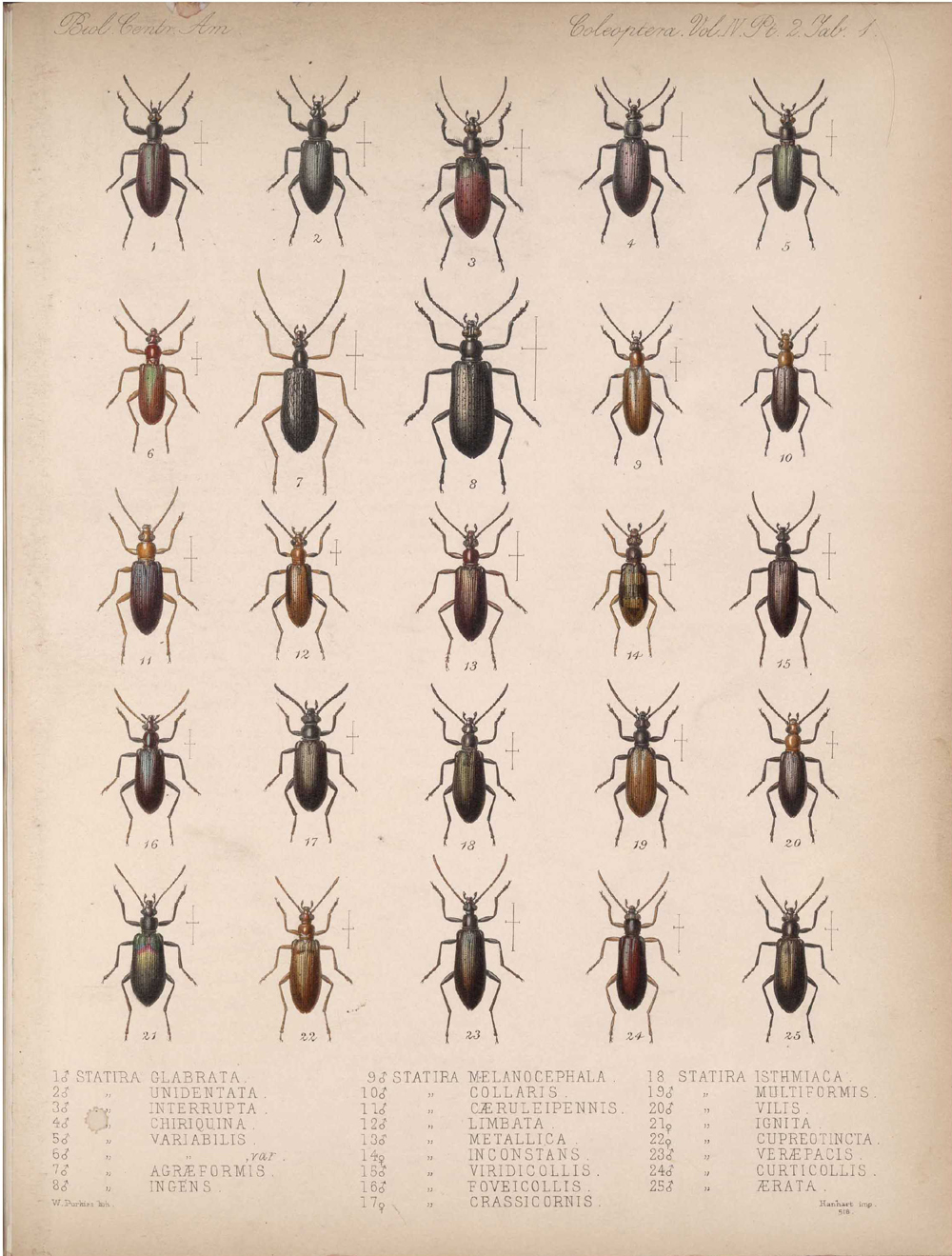Beetles,  Image number:bca_12_04_02_513