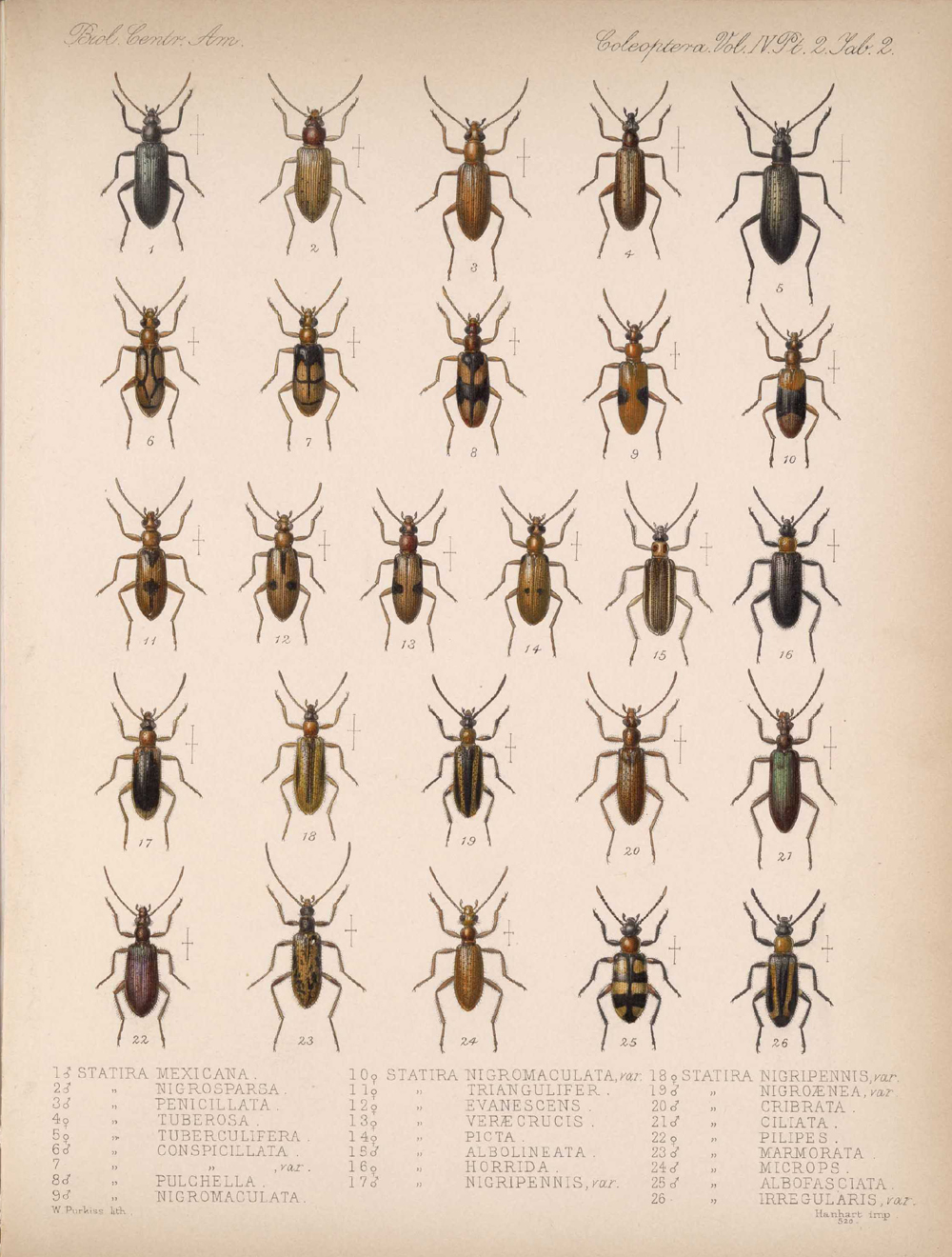 Beetles,  Image number:bca_12_04_02_514
