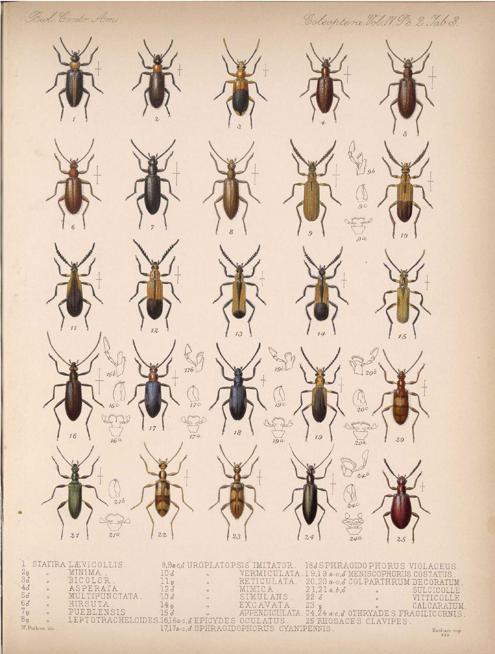 Beetles,  Image number:bca_12_04_02_515