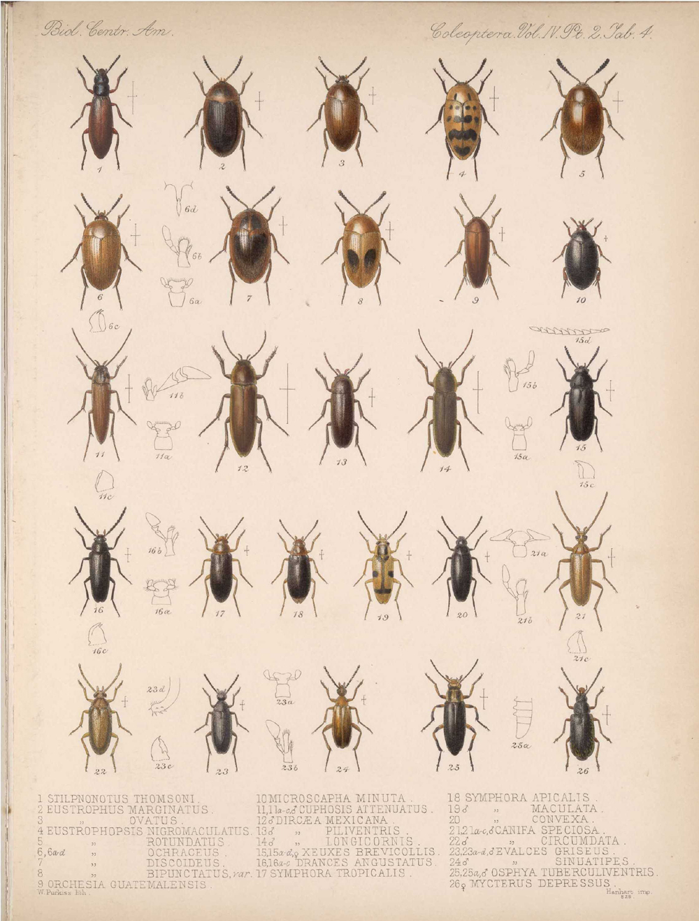 Beetles,  Image number:bca_12_04_02_516