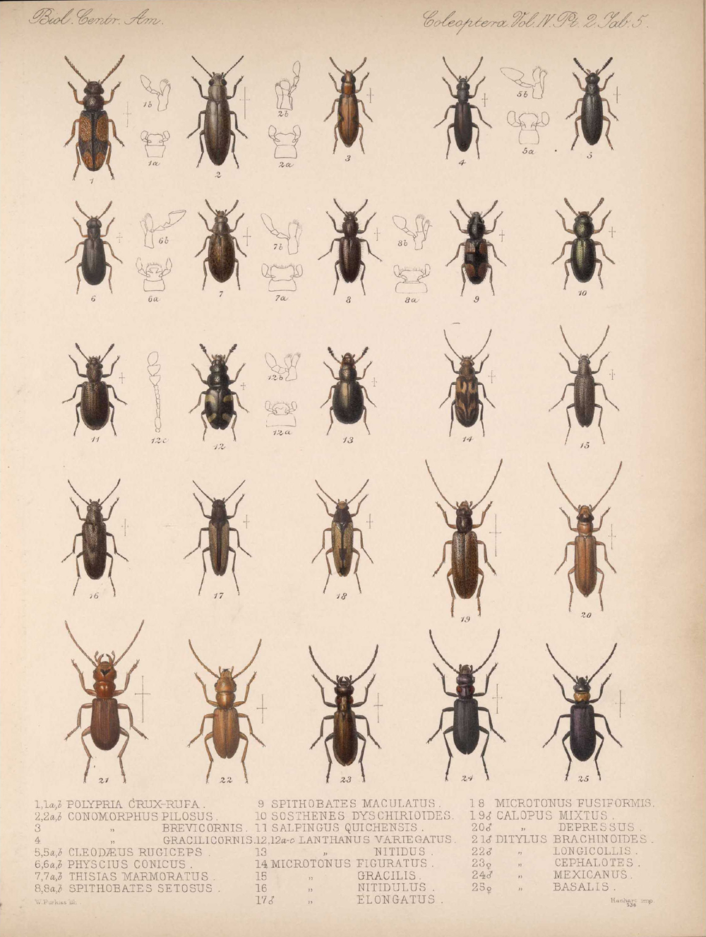 Beetles,  Image number:bca_12_04_02_517
