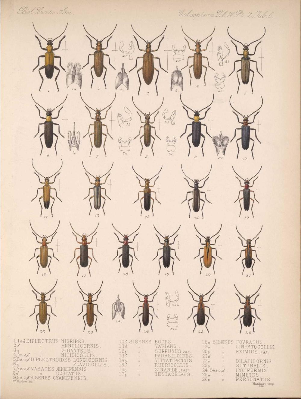 Beetles,  Image number:bca_12_04_02_518
