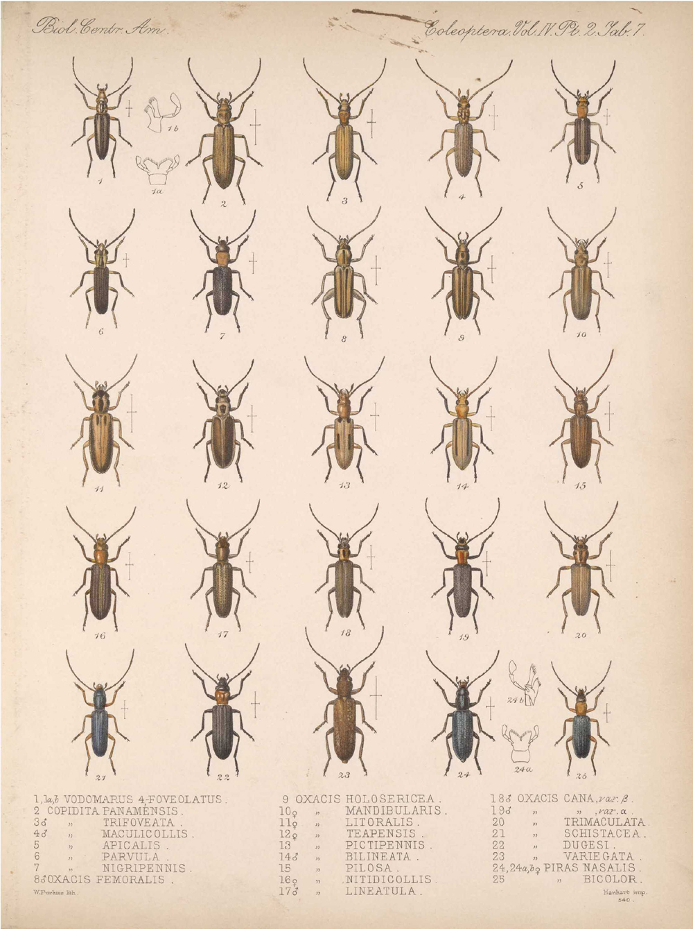 Beetles,  Image number:bca_12_04_02_519