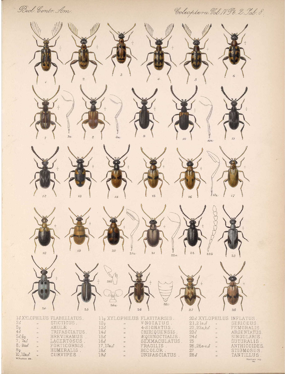 Beetles,  Image number:bca_12_04_02_520