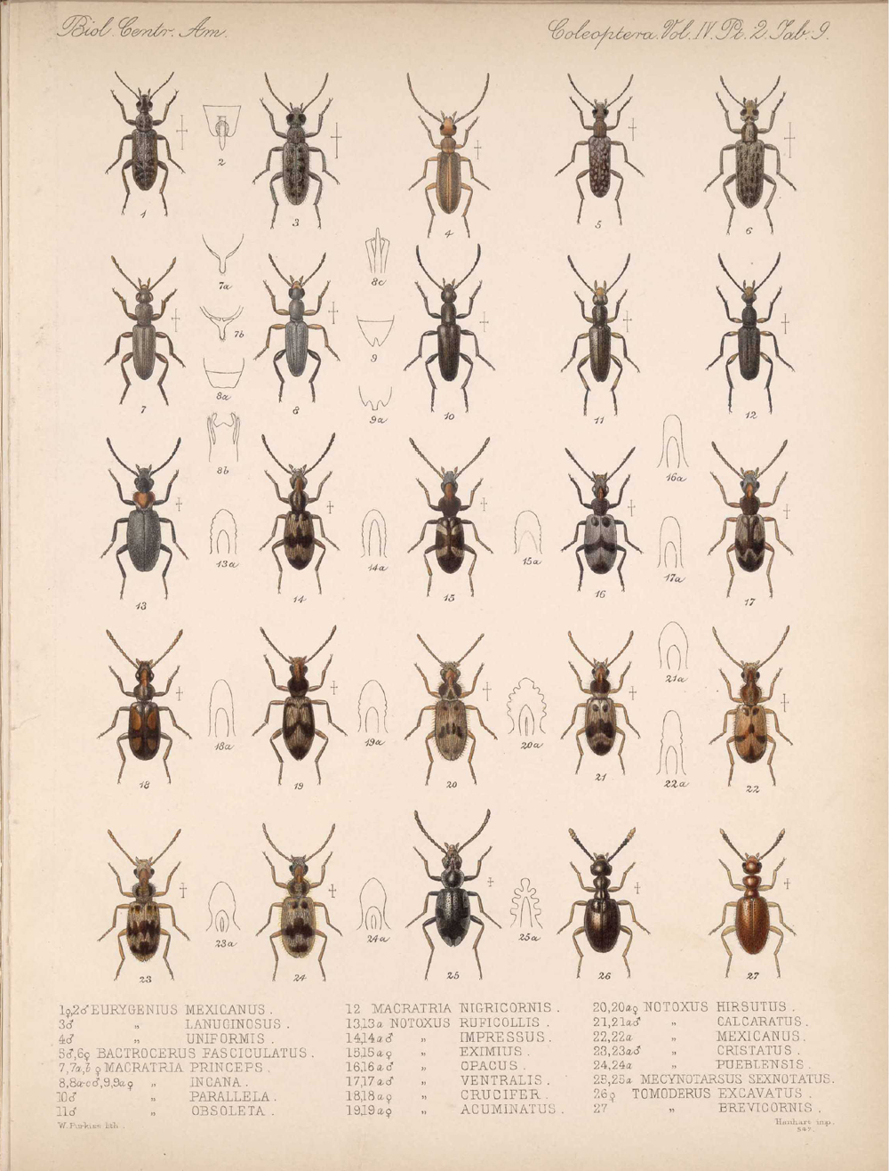 Beetles,  Image number:bca_12_04_02_521