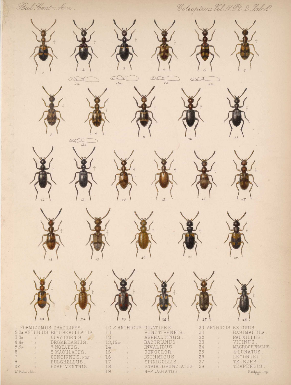 Beetles,  Image number:bca_12_04_02_522
