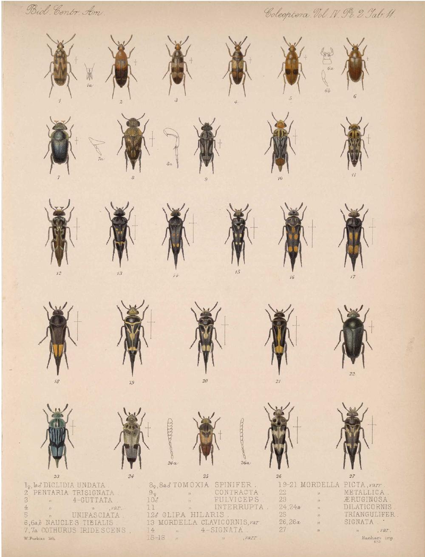 Beetles,  Image number:bca_12_04_02_523
