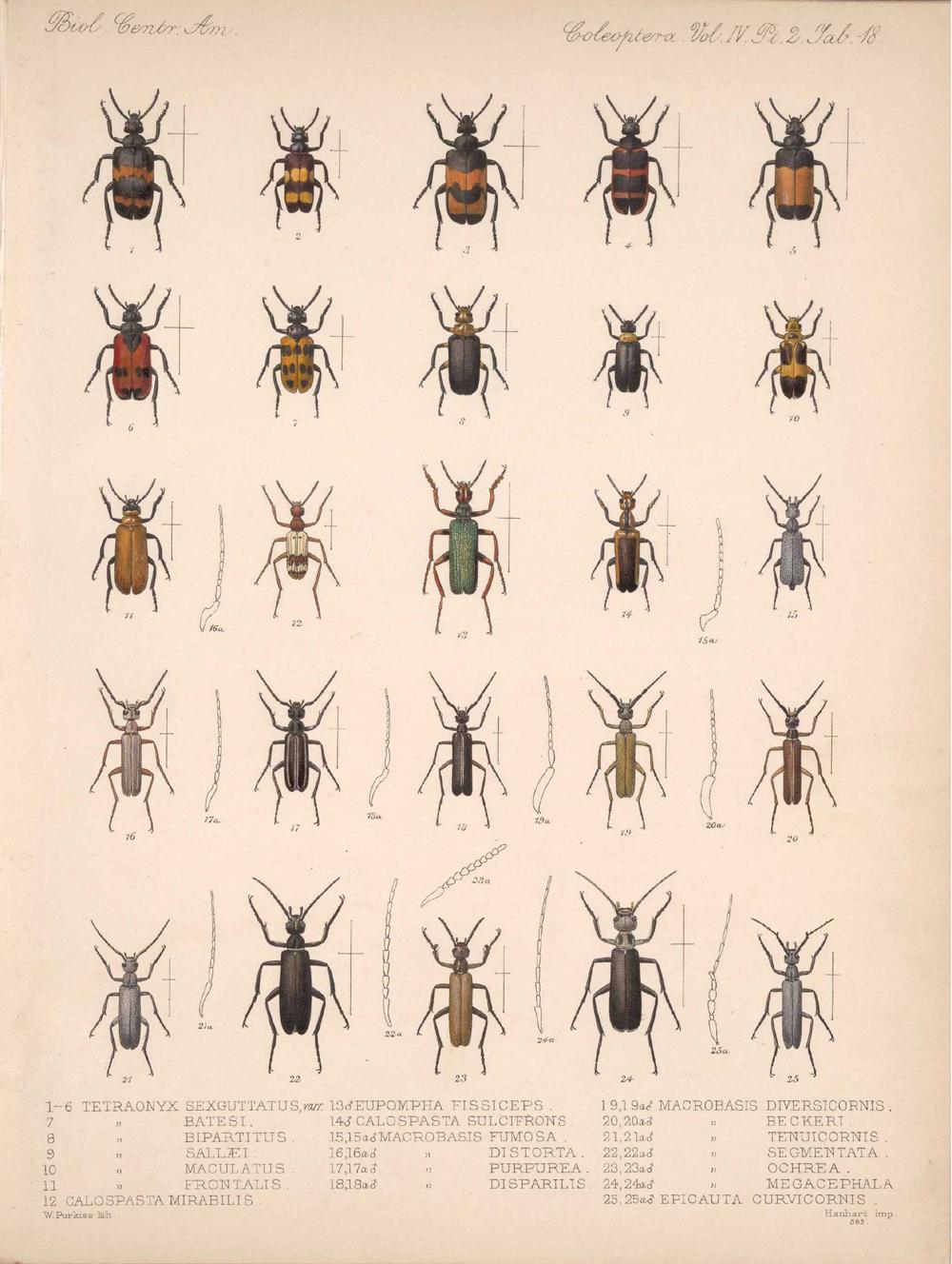 Beetles,  Image number:bca_12_04_02_530