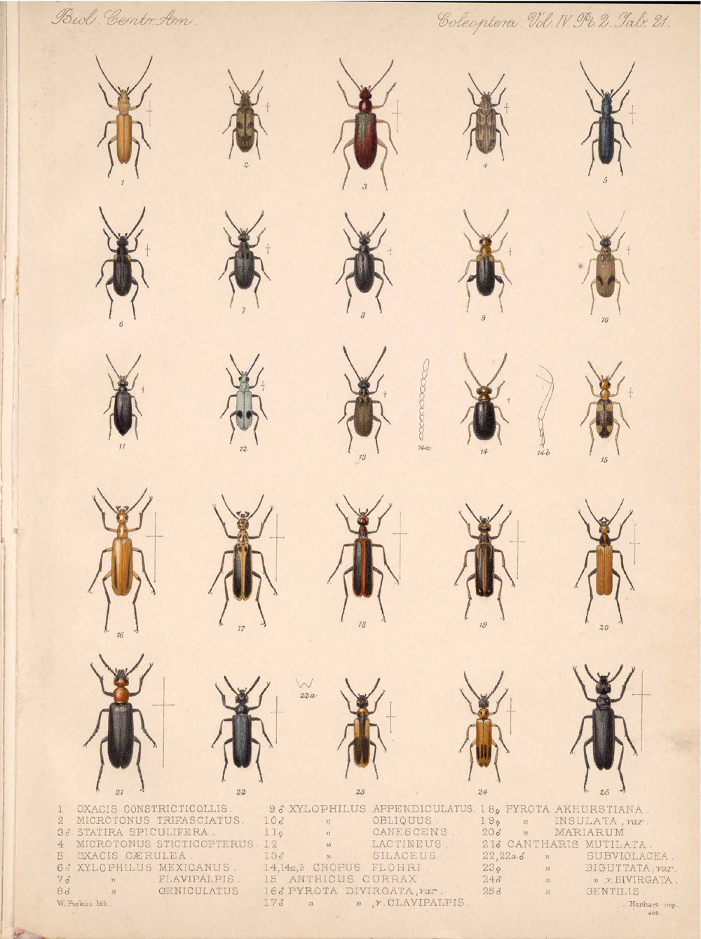 Beetles,  Image number:bca_12_04_02_533
