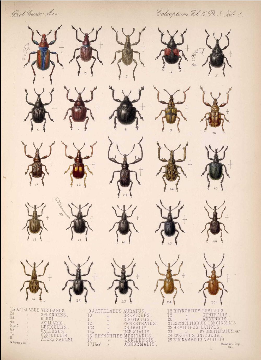 Beetles,  Image number:bca_12_04_03_367