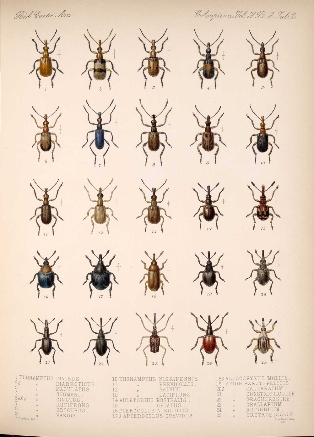 Beetles,  Image number:bca_12_04_03_369