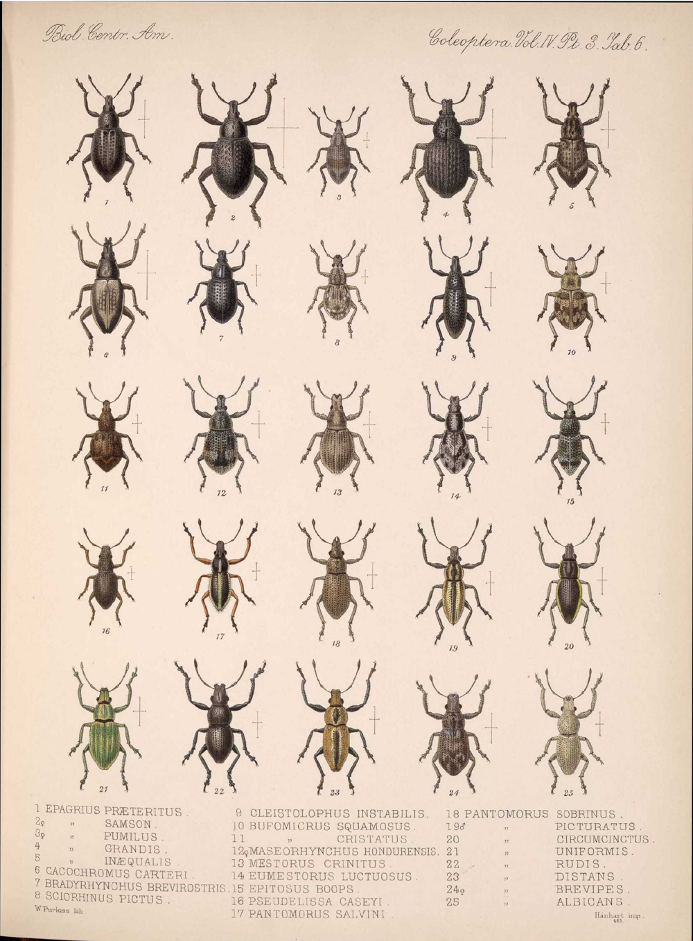 Beetles,  Image number:bca_12_04_03_377