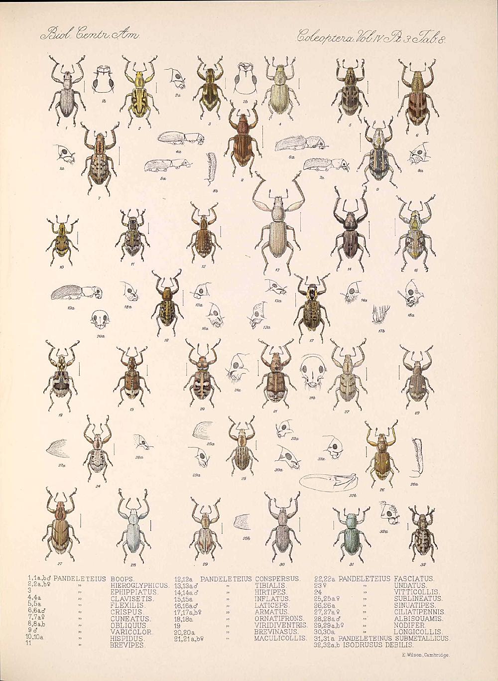 Beetles,  Image number:bca_12_04_03_381