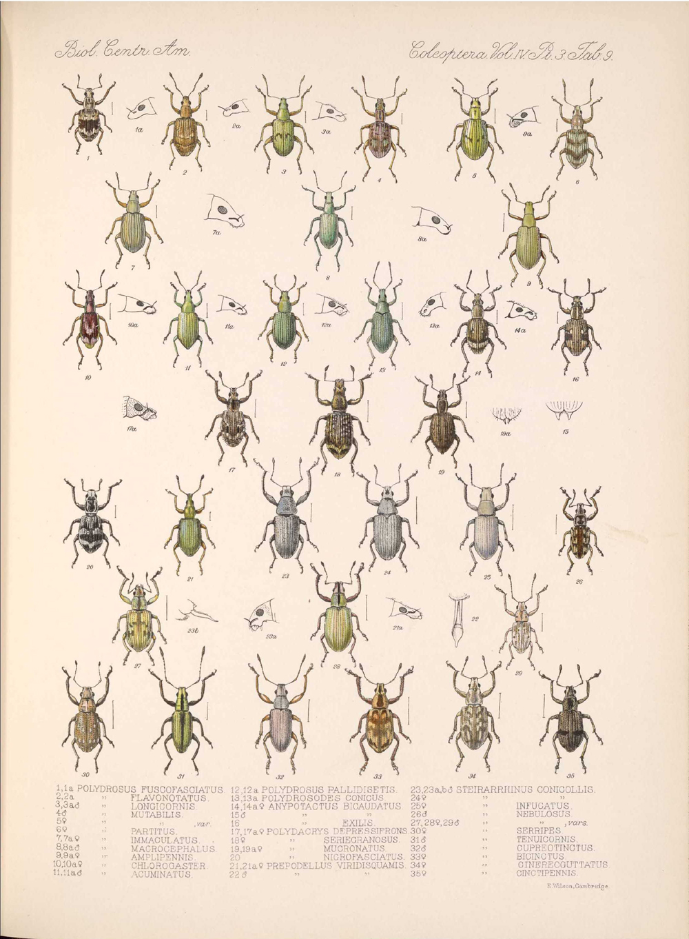 Beetles,  Image number:bca_12_04_03_383