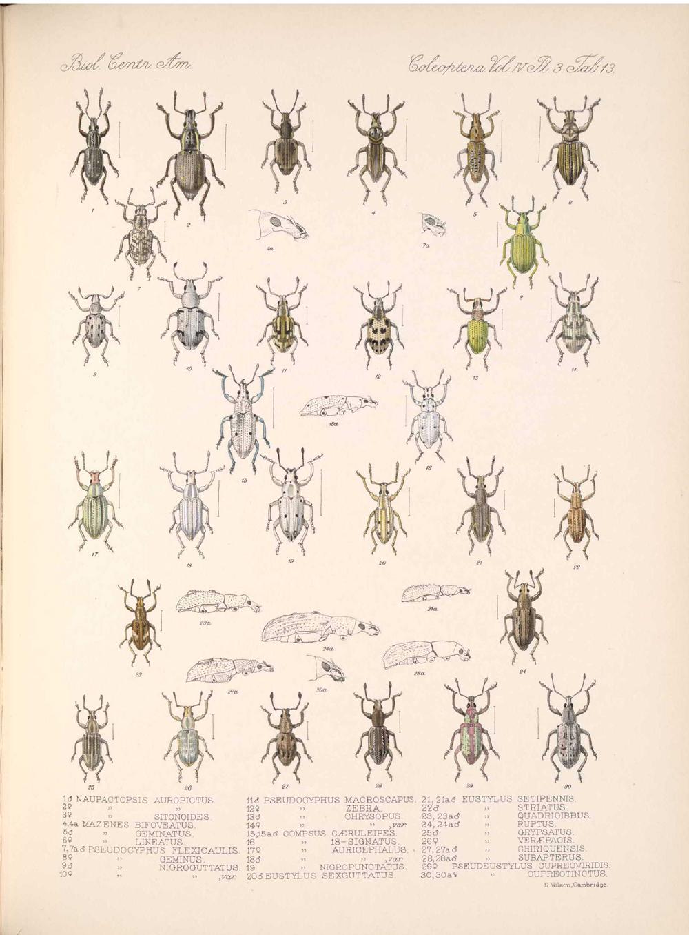 Beetles,  Image number:bca_12_04_03_391