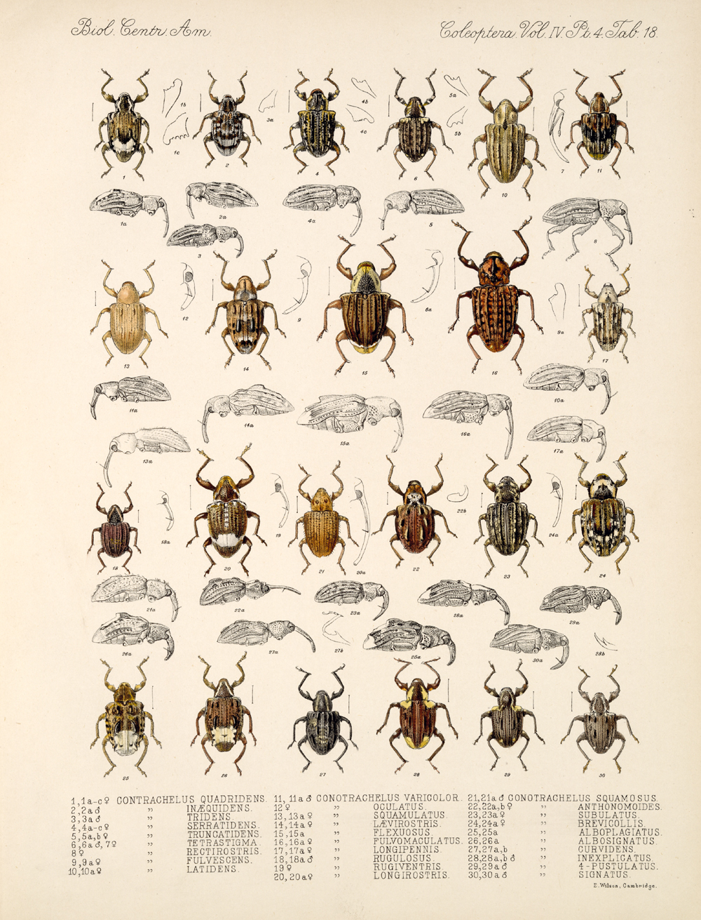 Beetles,  Image number:bca_12_04_04_799