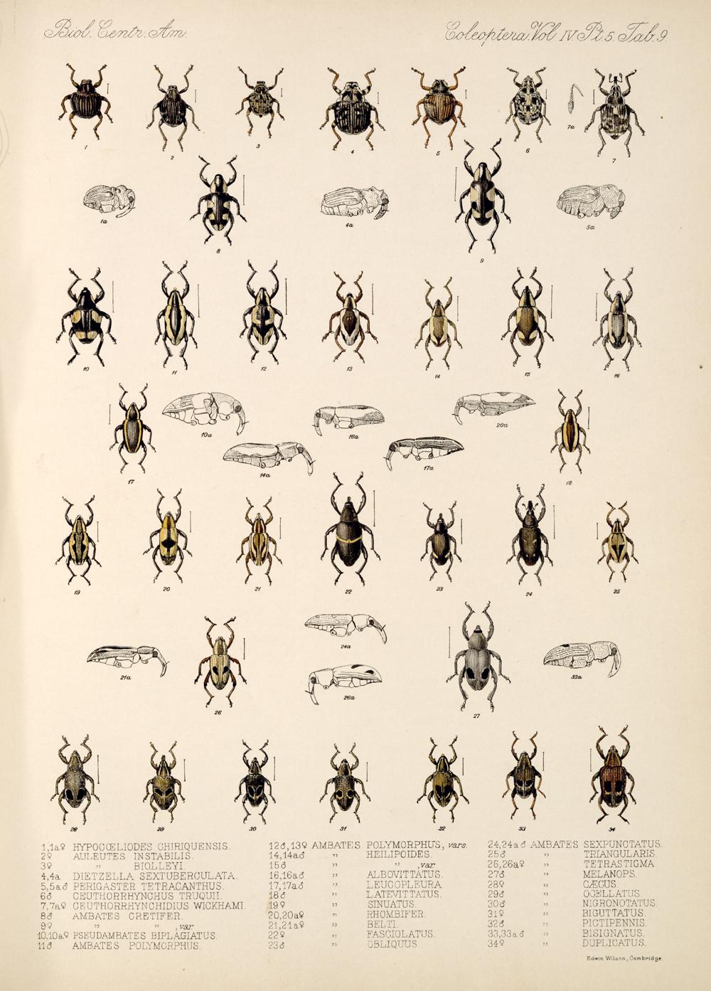 Beetles,  Image number:bca_12_04_05_545