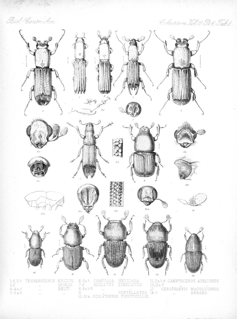 Beetles,  Image number:bca_12_04_06_417