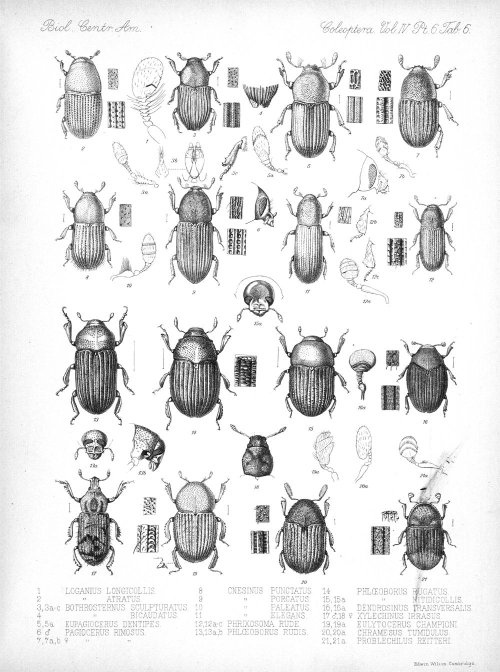 Beetles,  Image number:bca_12_04_06_419