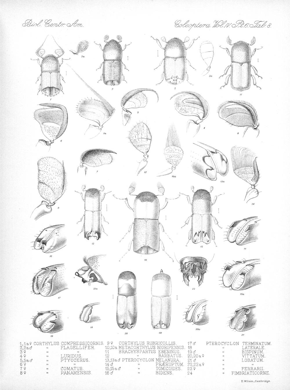 Beetles,  Image number:bca_12_04_06_423