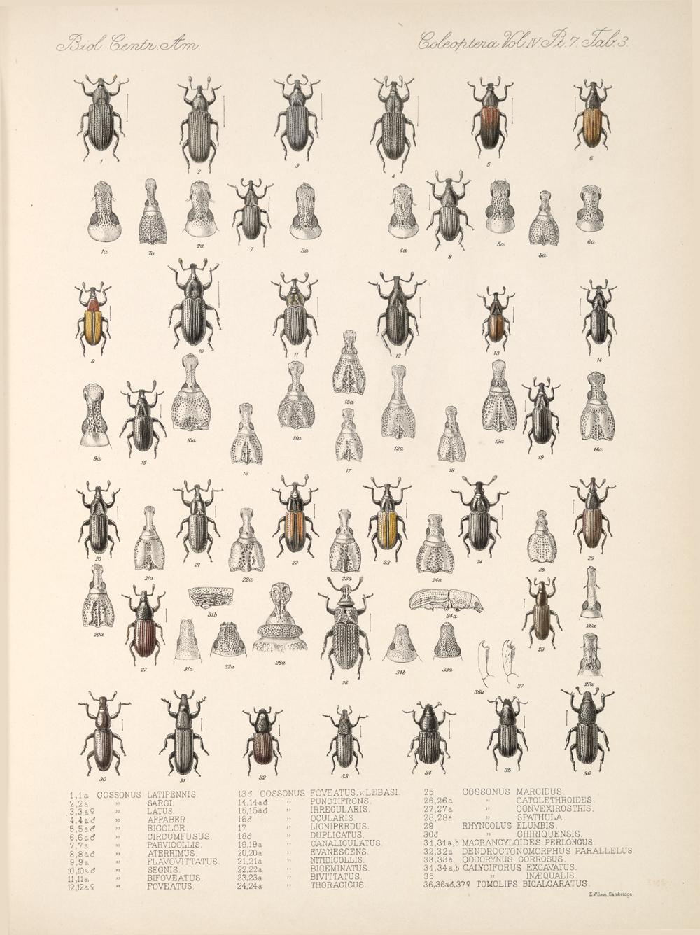 Beetles,  Image number:bca_12_04_07_239