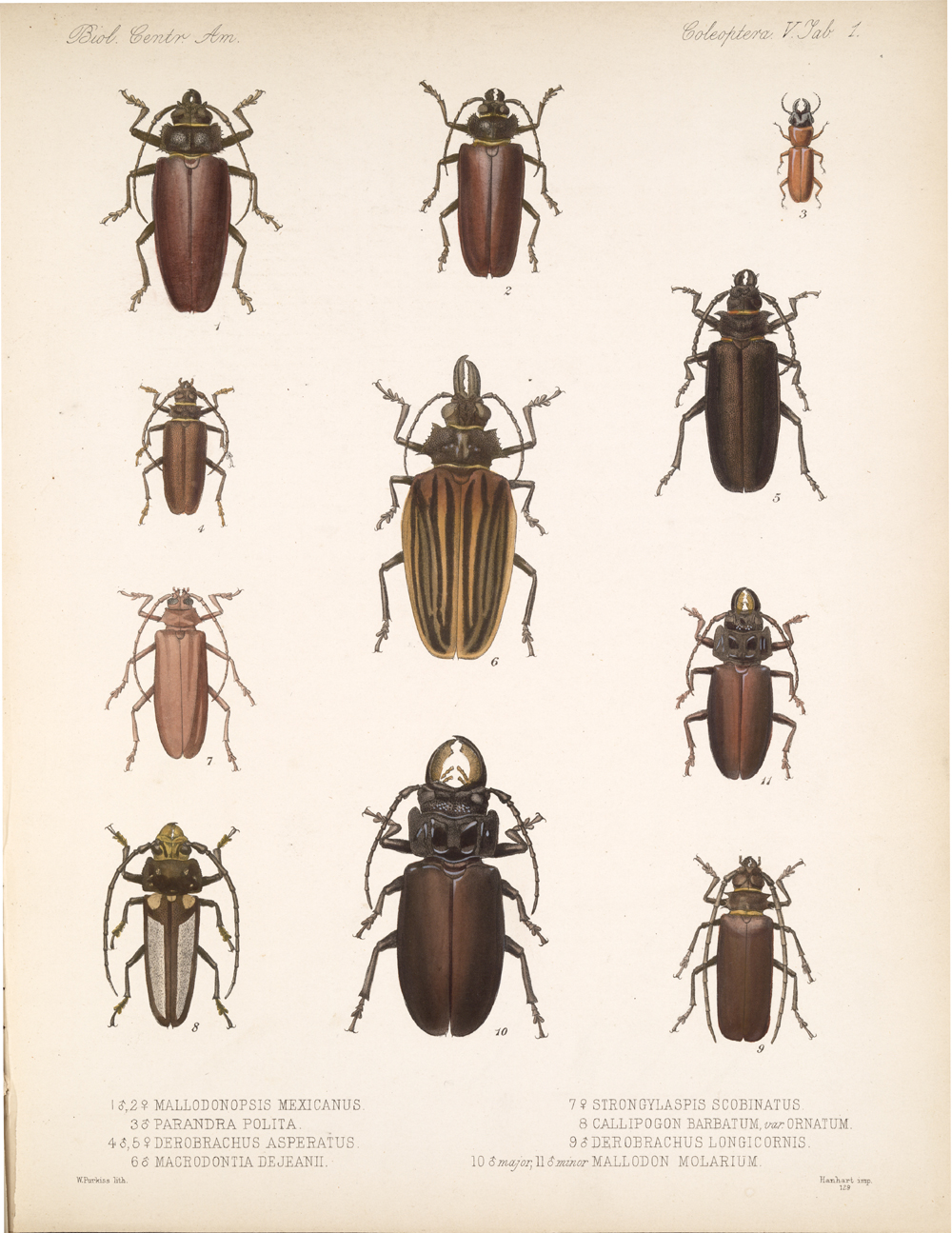 Beetles,  Image number:bca_12_05_00_545