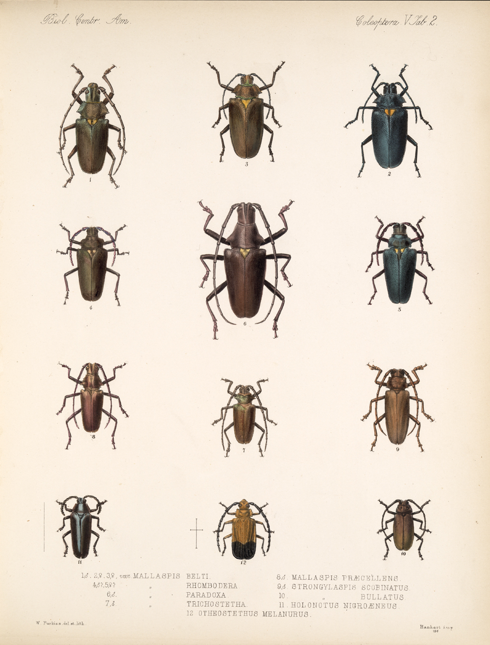 Beetles,  Image number:bca_12_05_00_546