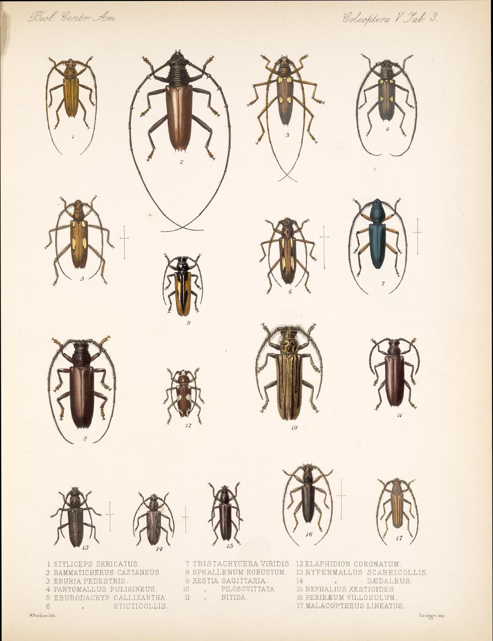 Beetles,  Image number:bca_12_05_00_547