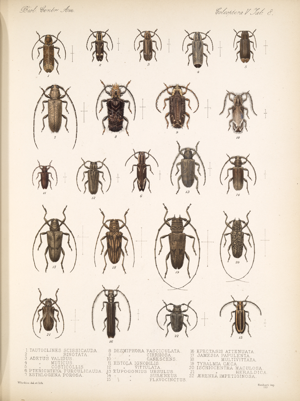 Beetles,  Image number:bca_12_05_00_552