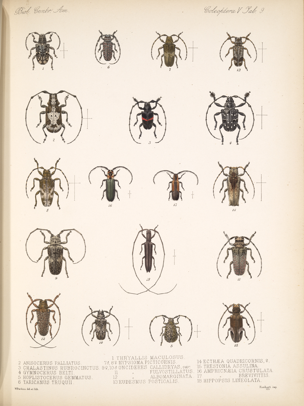 Beetles,  Image number:bca_12_05_00_553