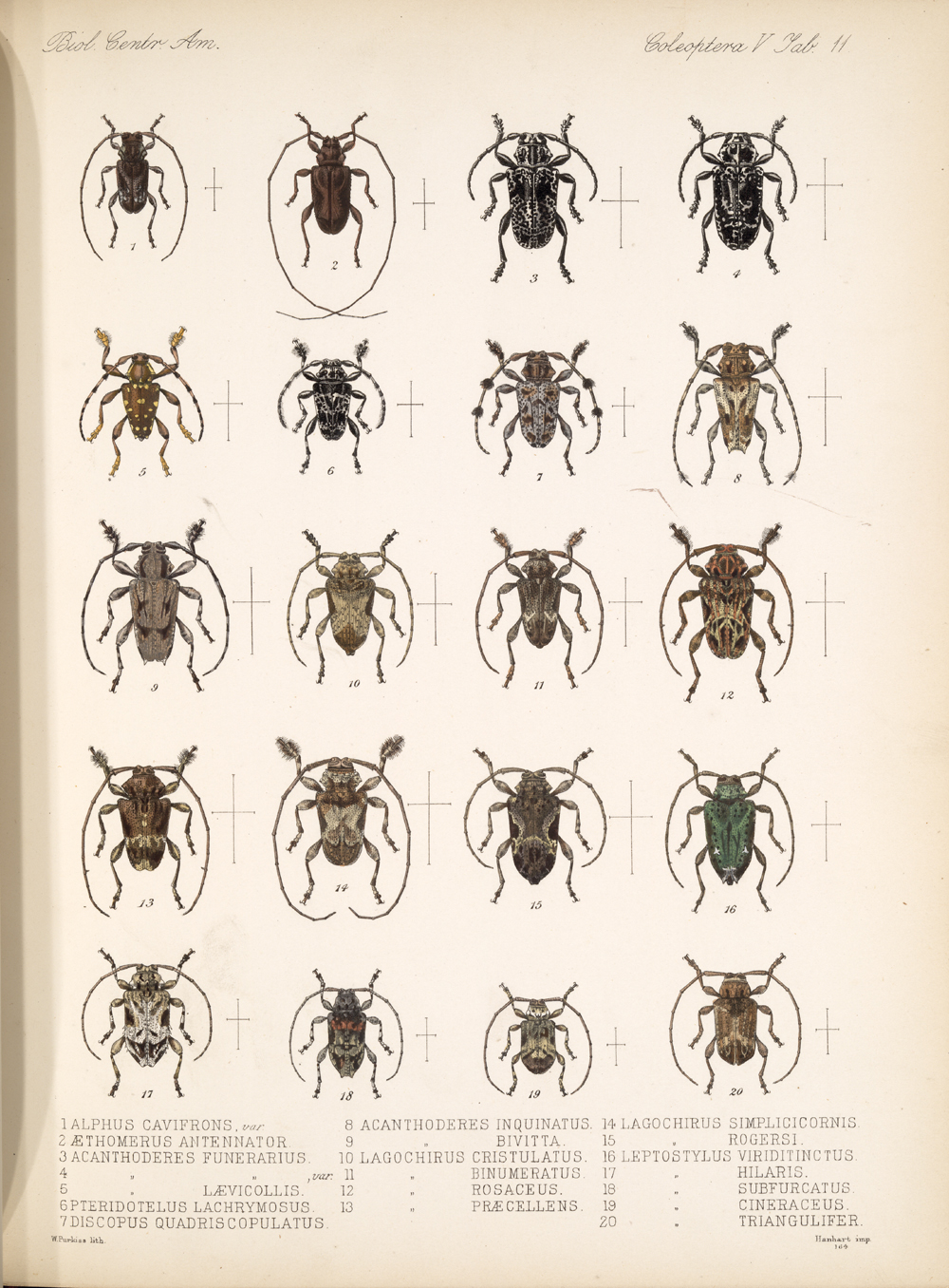 Beetles,  Image number:bca_12_05_00_555