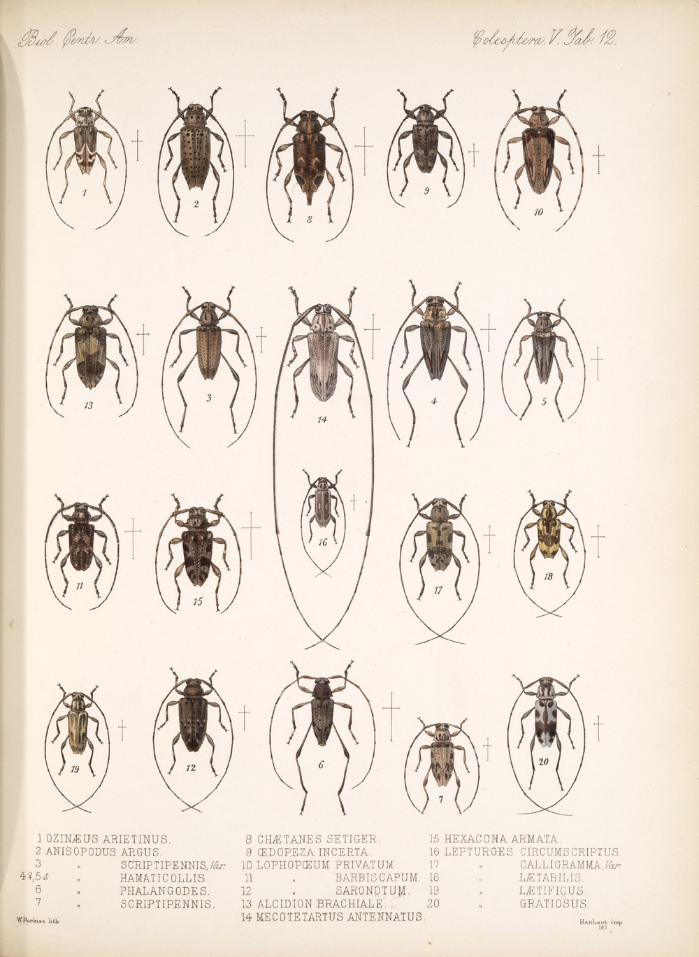 Beetles,  Image number:bca_12_05_00_556