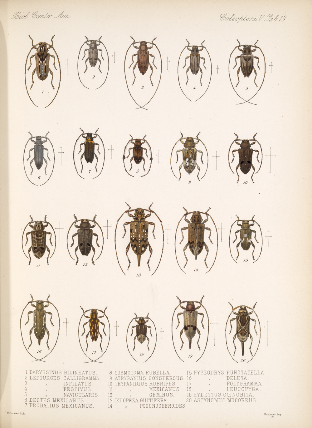 Beetles,  Image number:bca_12_05_00_557
