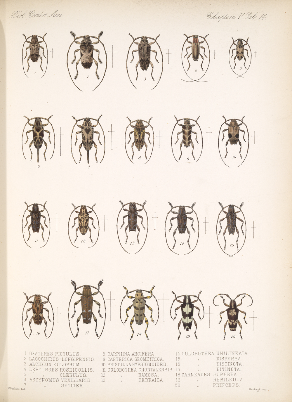 Beetles,  Image number:bca_12_05_00_558