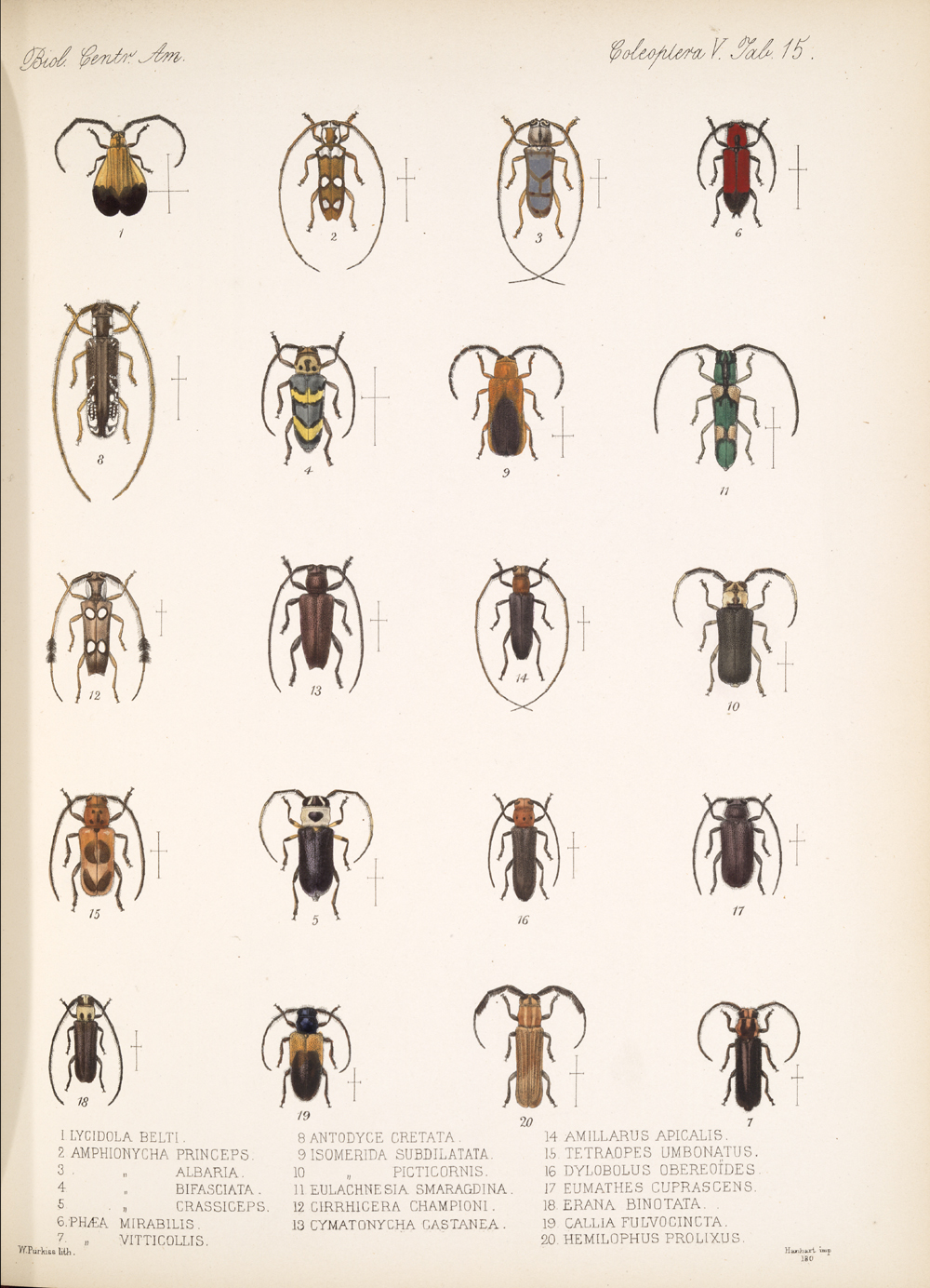 Beetles,  Image number:bca_12_05_00_559