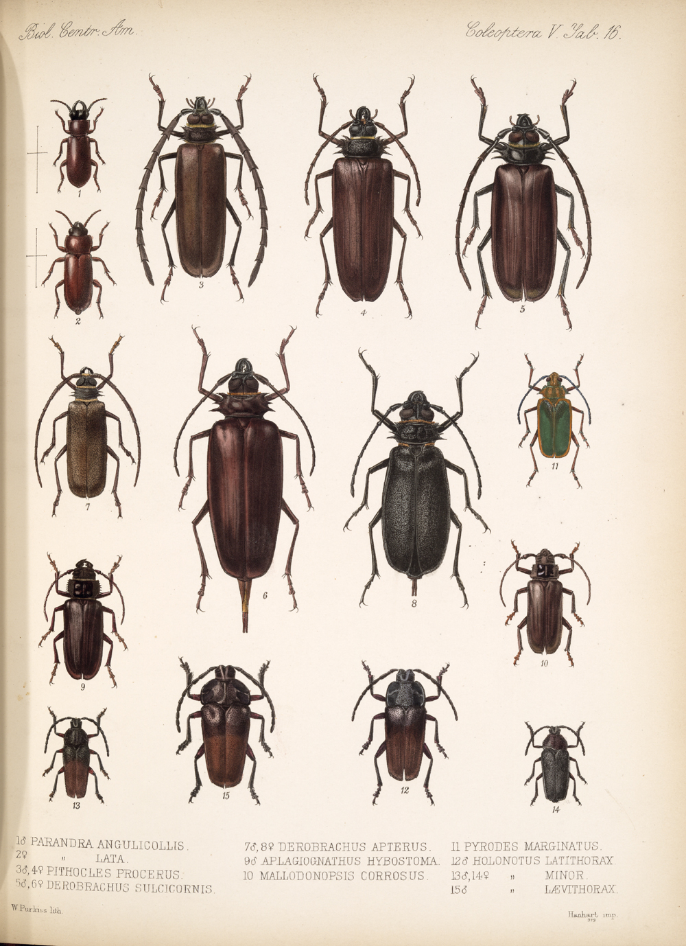 Beetles,  Image number:bca_12_05_00_560