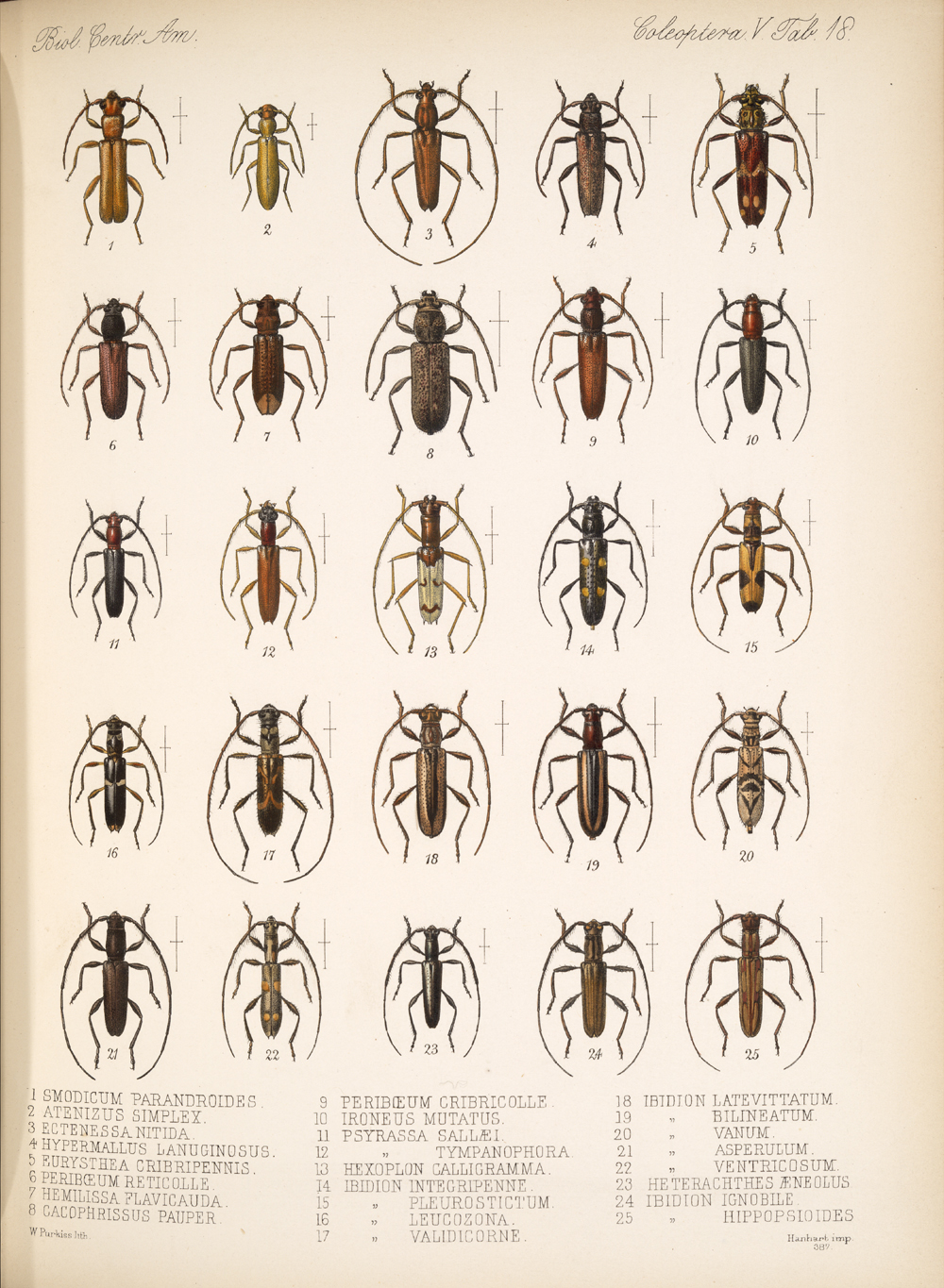 Beetles,  Image number:bca_12_05_00_562