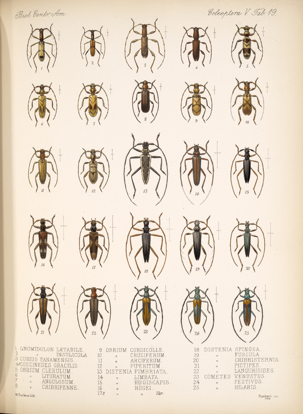 Beetles,  Image number:bca_12_05_00_563
