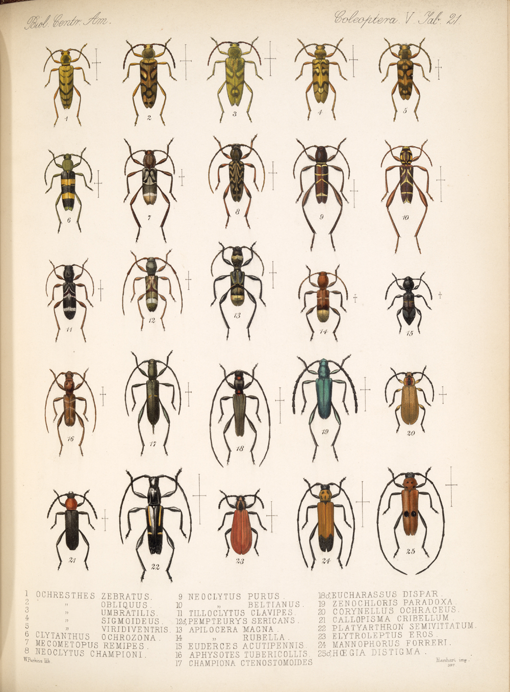 Beetles,  Image number:bca_12_05_00_565