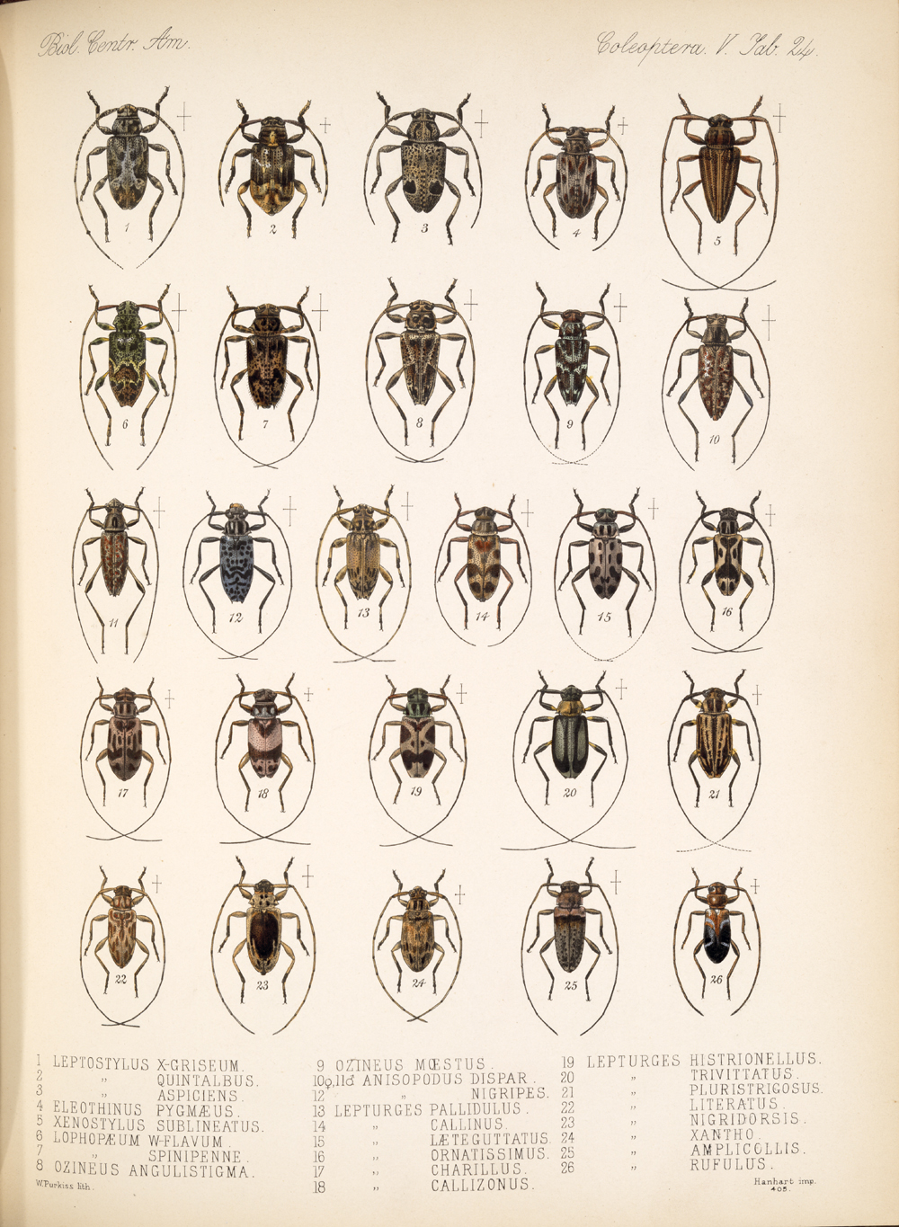 Beetles,  Image number:bca_12_05_00_568