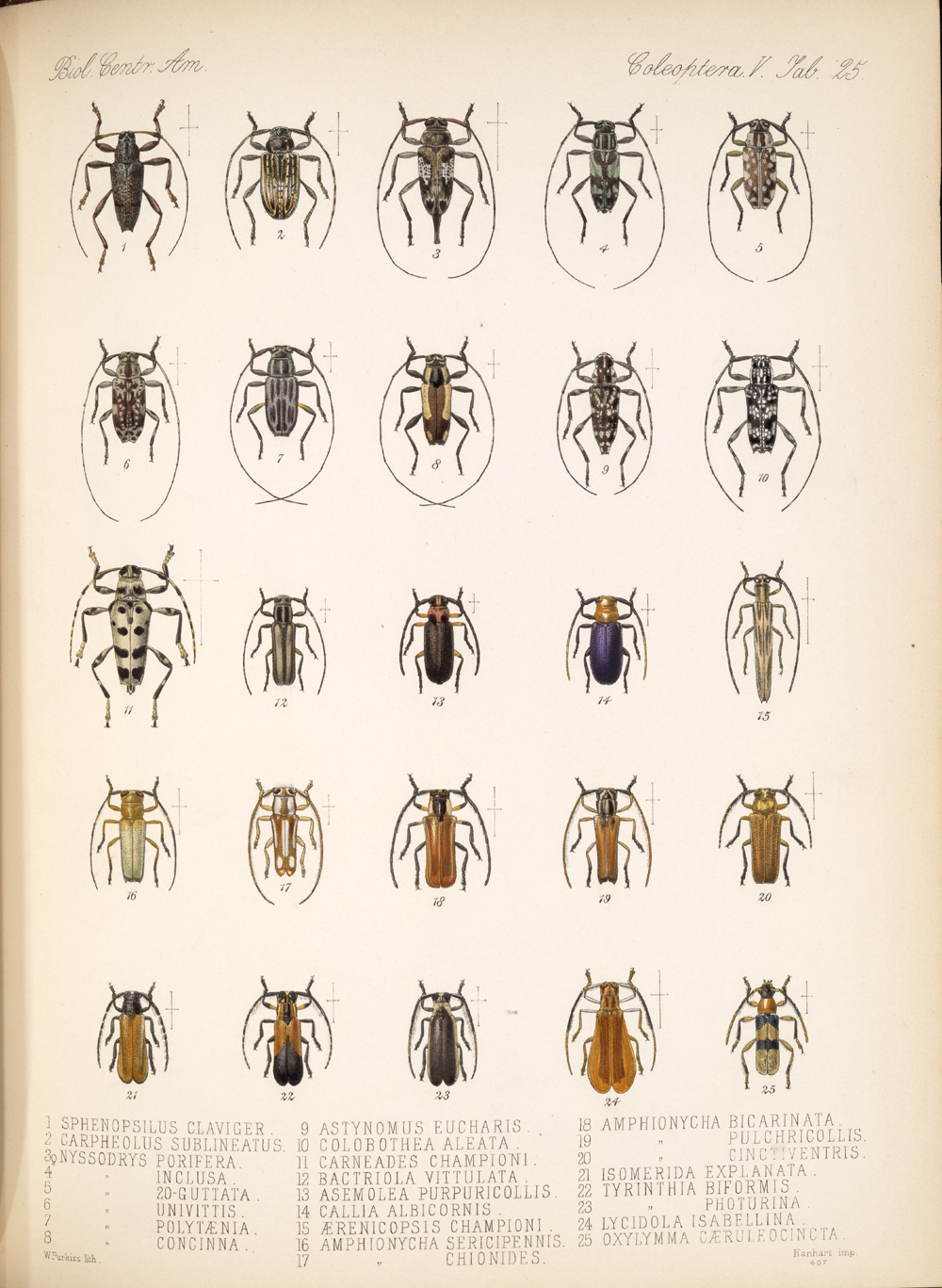 Beetles,  Image number:bca_12_05_00_569