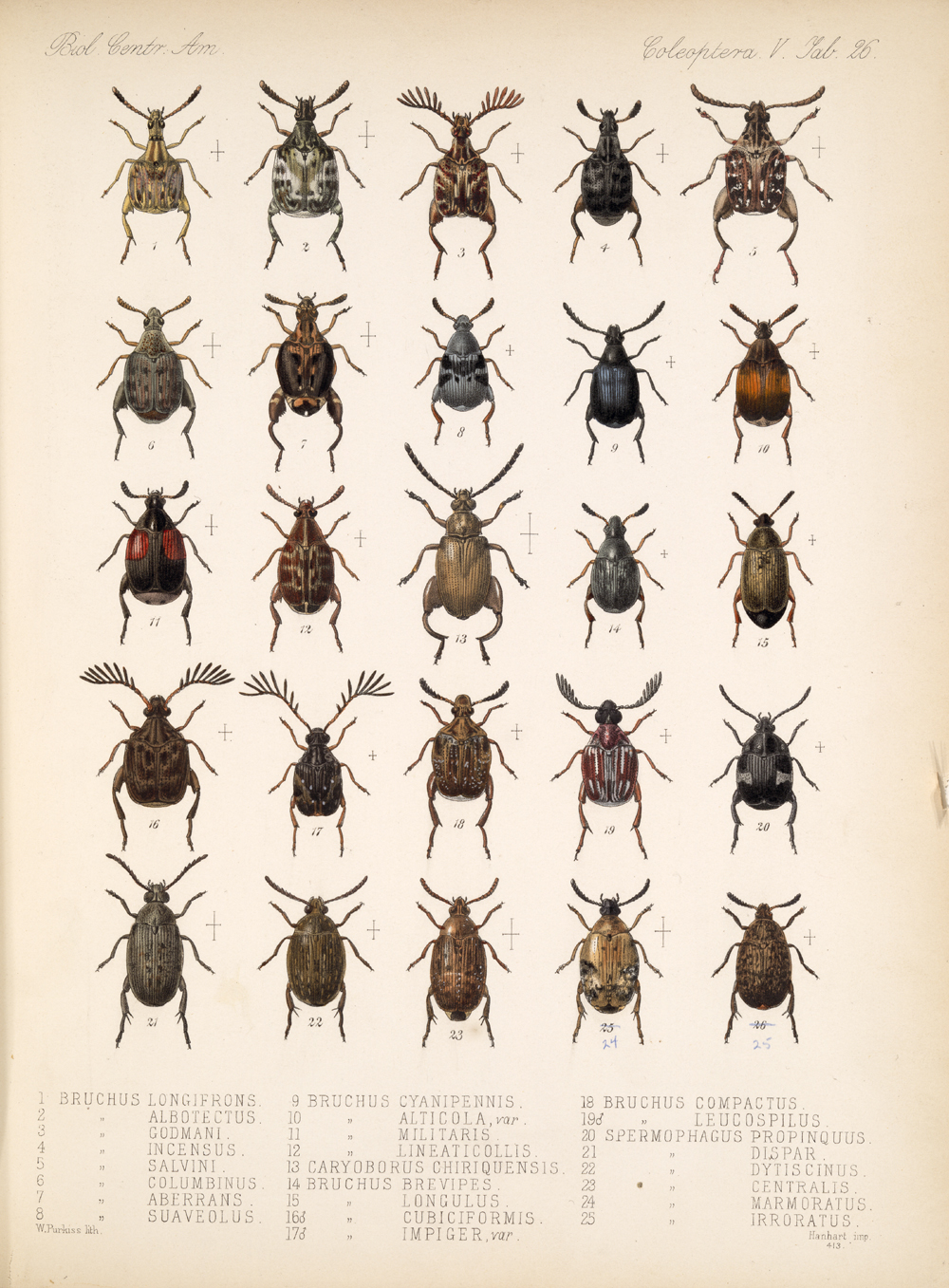 Beetles,  Image number:bca_12_05_00_570