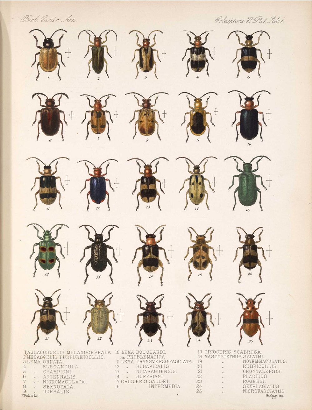 Beetles,  Image number:bca_12_06_01s_385