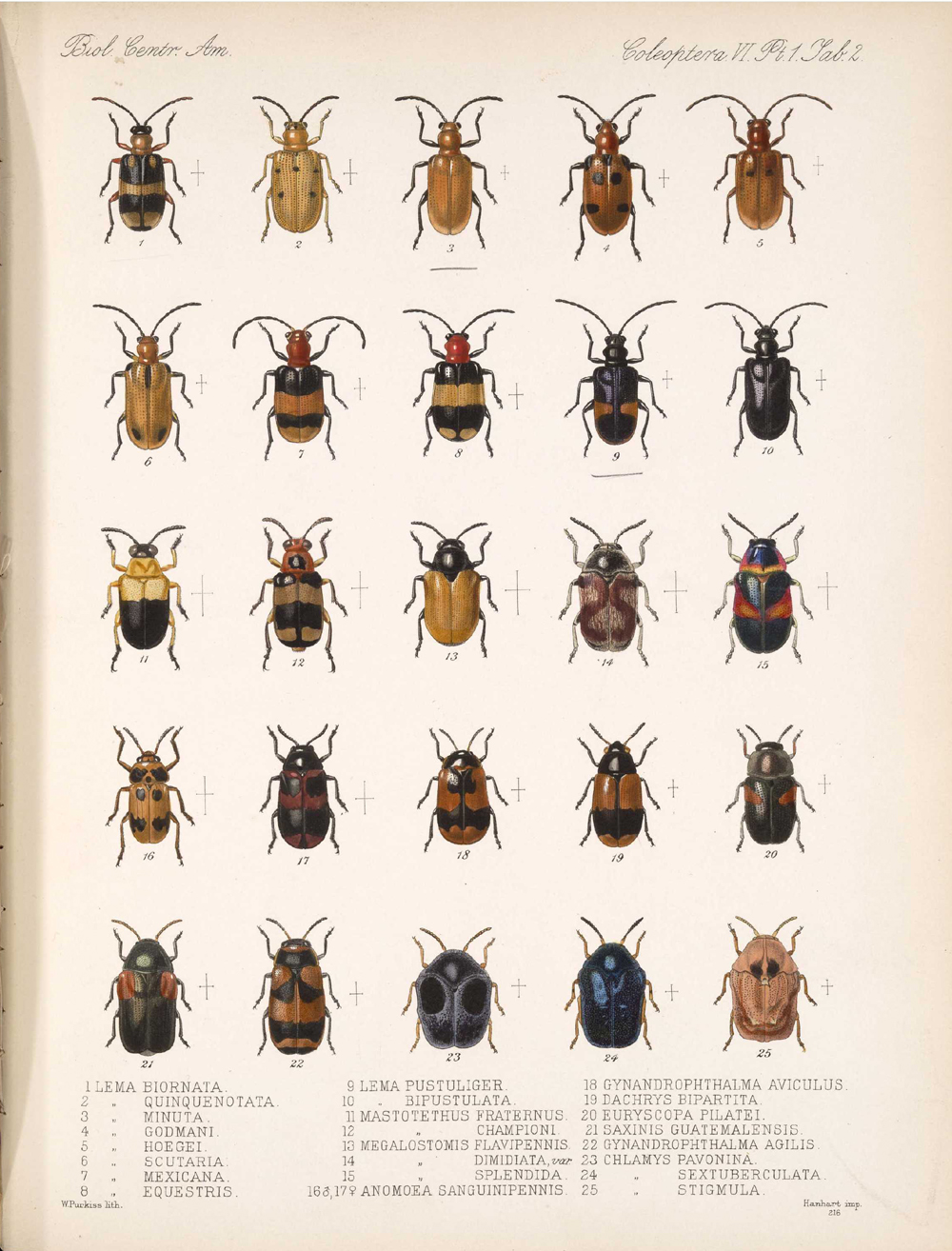 Beetles,  Image number:bca_12_06_01s_386