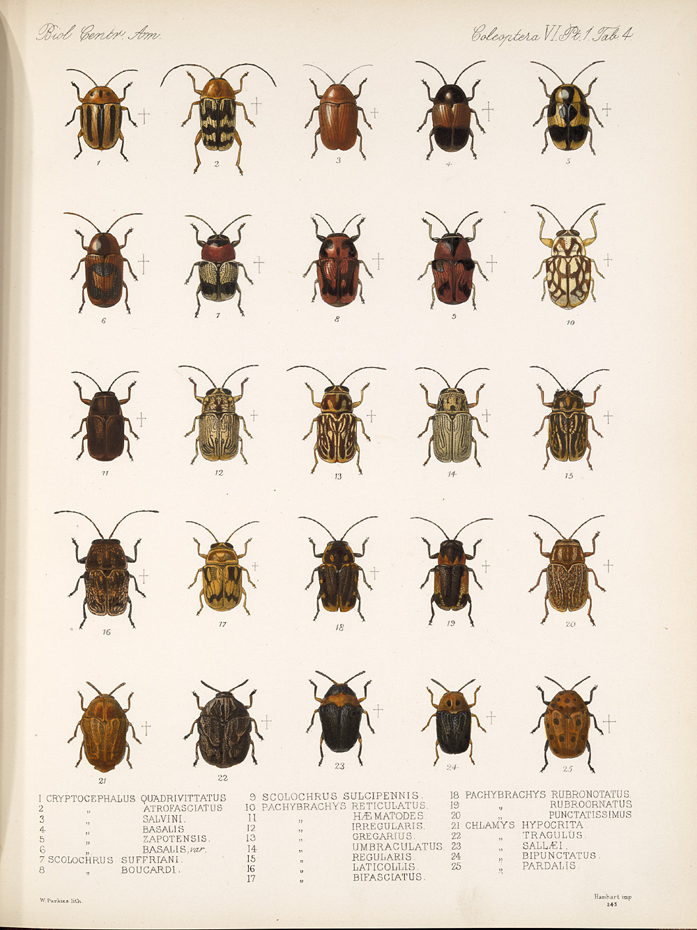 Beetles,  Image number:bca_12_06_01s_388